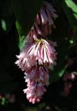 flora-29