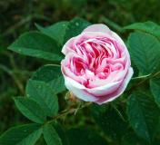 flora-3