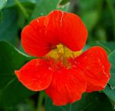 flora-6