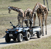 giraffer Ree Park